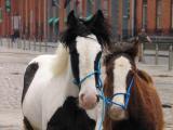 Horse market.jpg
