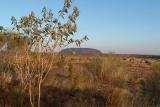 Ayers Rock , Uluru , Northern Territory , Australia