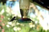 4000sec hummingbird