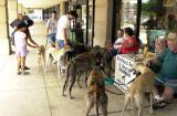 Greyhound meet and greet in Hancock