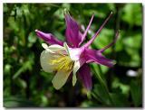 Flowers 2005 Vol. #2