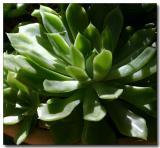 Succulents in a pot  Av experiment