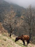 Near Capileira