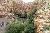 There are numerous wadis with lush vegetation entering into the Dead Sea