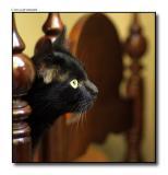 Cat peers out between chairs copy 2.jpg