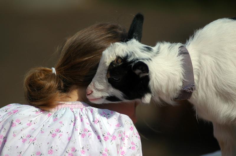 Petting Farm 23