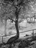 Oak-and-birdhouse-ir.jpg