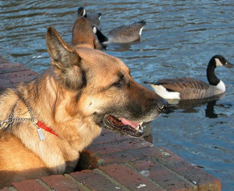 Feeding The Ducks 02