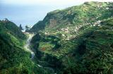 Ile de Madère - Vallée avec cultures en terrasses