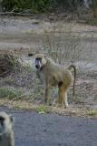 One of the Yellow Baboon roadside gang