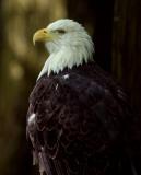 eagles_etc