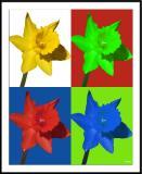 4/11/05 - Four Daffodils 2ds20050410_0181awF 4 Daffodils 2.jpg
