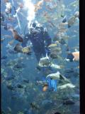Fish feeding in the kelp forest