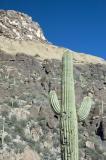 Cactus and Ridge Above