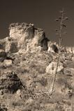 Sepia Rock and Century Plant