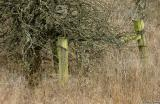Mossy fence posts