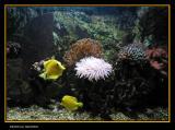 Granville aquarium