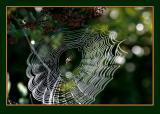 Weaving an impressive web