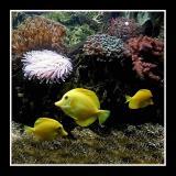 Tropical fish ( Granville Aquarium )