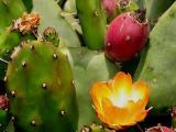Desert Flowers 2