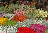 At the flower market on Selanik
