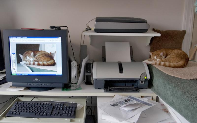 Sony Cat on Left