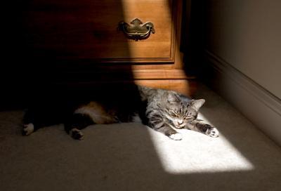 Sliver of Sun