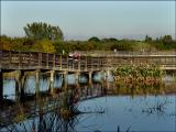 Wakodahatchee Wetlands Walkway, Boynton Beach