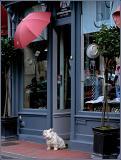 The dog and its umbrella