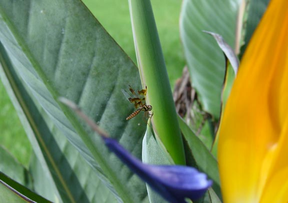 Dragonfly on BOP web.jpg