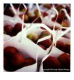11.08.04 apples