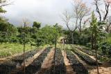 Casa Ruiz coffee plantation