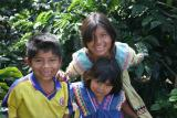 children of indigenous Panama indians working in the coffee plantation