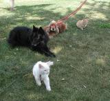 Tässä koko eläinperhe ja Putten ja Lindan koirakaverit Merri ja Sofi.