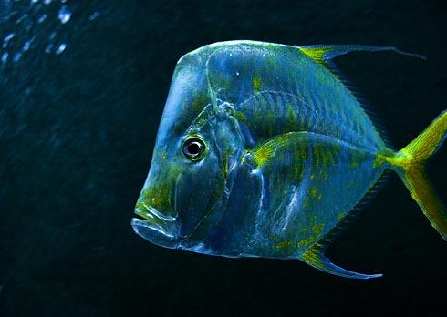 Fish at Kemah