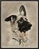 Skye as a Puppy