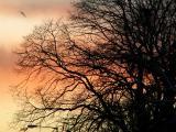 treebirdx.jpg