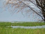 Lac  Chapala les plantes qui recouvrent une partie du lac s'appellent lirio