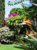 Restaurant la nueva posada à Ajijic: l'oiseau du paradis est le nom de la plante au premier plan.