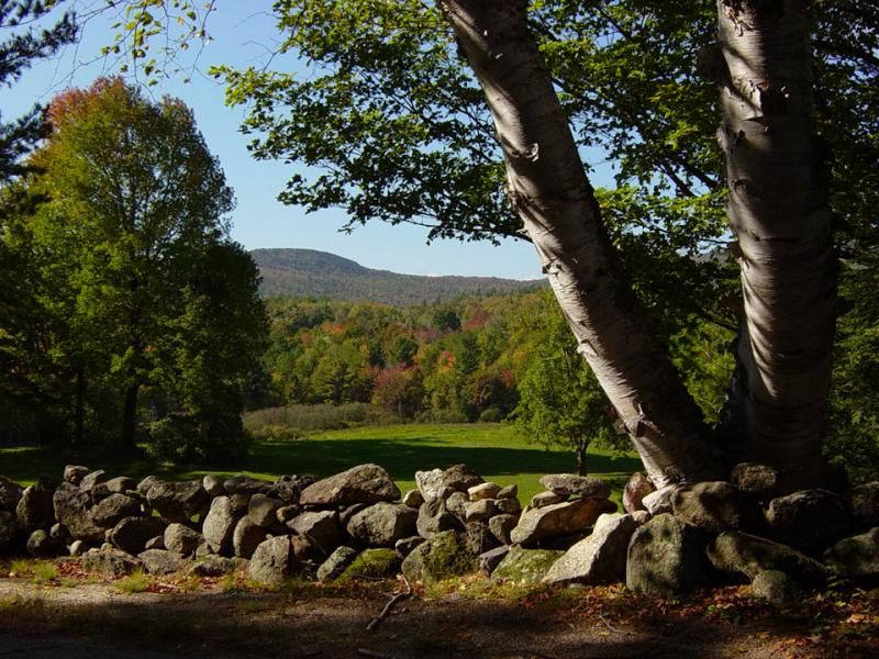 NH - Stone wall and Birches