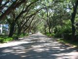 this street was in the National Geographic as one of the most beautiful streets in America