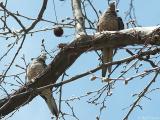 2005-04-10 Doves