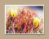 Barrel cactus flower II
