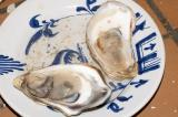 malpeque oysters 2