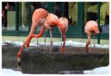 Schoenbrunn-Zoo