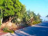 Dead sea - Kibbutz Ein Gedi 14.jpg