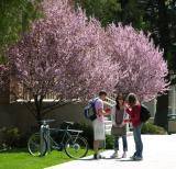 Spring at Idaho State University DSCN6164.JPG