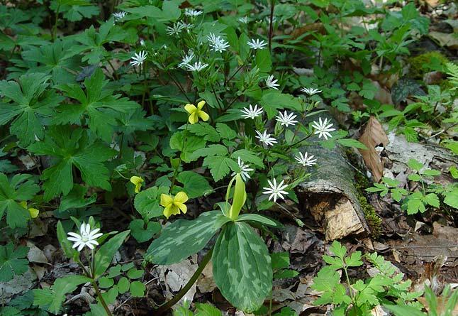 Wildflower Combo