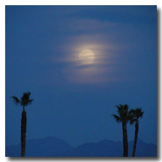 Palms and Hazy Moon