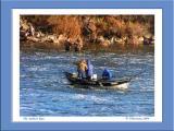 The Salmon Run
